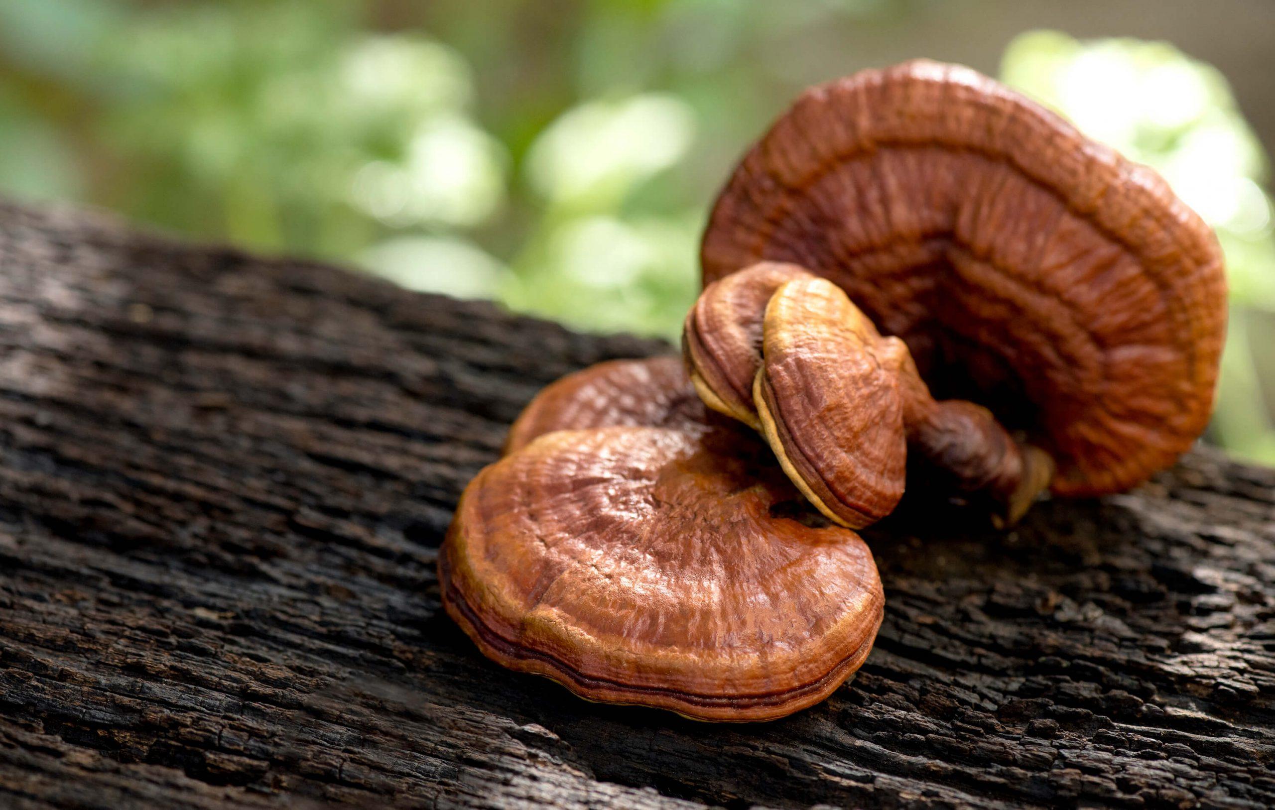 CBD and mushrooms